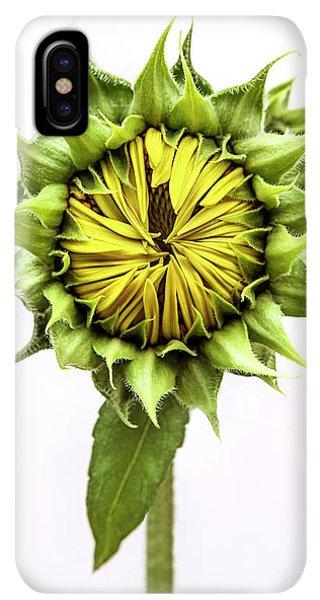 Sunflower Seeds iPhone XS Max Case - Sunflower by Diane Diederich