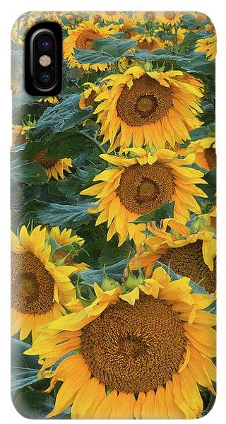 Sunflower Seeds iPhone XS Max Case - Sunflowers by Steve Gadomski