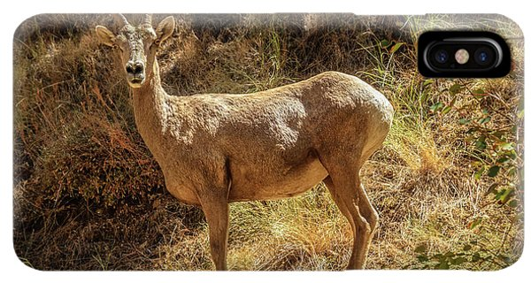 Rocky Mountain Bighorn Sheep iPhone XS Max Case - The Argali  by Robert Bales
