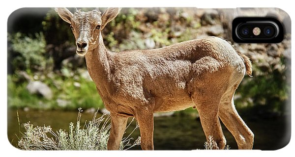 Rocky Mountain Bighorn Sheep iPhone XS Max Case - The Cute One by Robert Bales