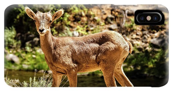 Rocky Mountain Bighorn Sheep iPhone XS Max Case - The Young One by Robert Bales