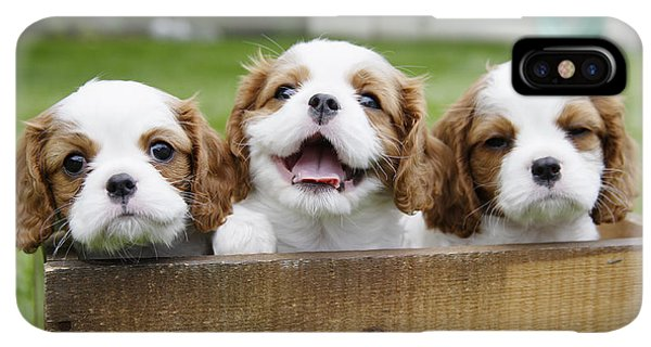 Puppies iPhone XS Max Case - Three Cocker Spaniels Peeking by Gillham Studios