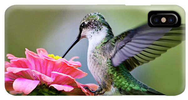 Humming Bird iPhone XS Max Case - Tranquil Joy Hummingbird Square by Christina Rollo