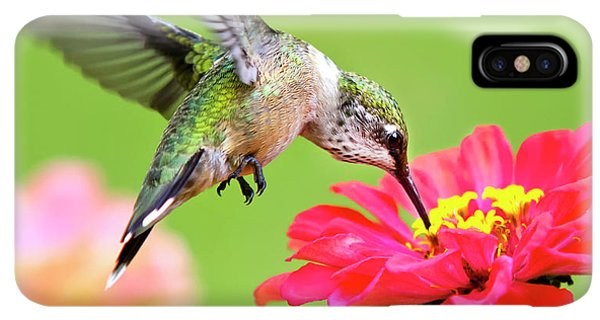 Humming Bird iPhone XS Max Case - Waiting In The Wings Hummingbird Square by Christina Rollo