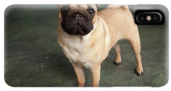 Pug iPhone XS Max Case - Portrait Of A Pug Mixed Dog by Panoramic Images