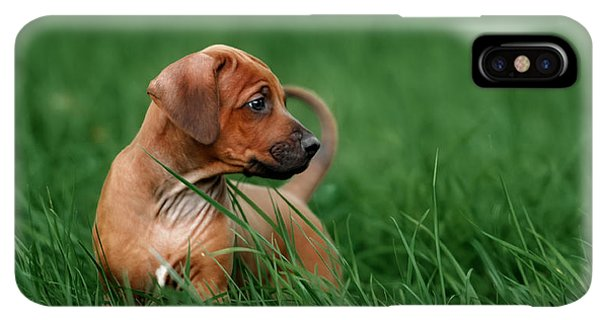Puppies iPhone XS Max Case - Adorable Little Rhodesian Ridgeback by Ekaterina Brusnika
