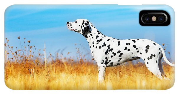 Puppies iPhone XS Max Case - Beautiful Dalmatian Dog In A Field by Tatiana Katsai