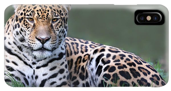 Belize iPhone XS Max Case - Close-up View Of A Jaguar Panthera Onca by Henner Damke