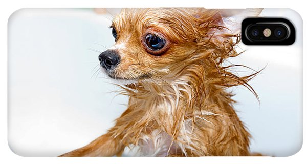 Puppies iPhone XS Max Case - Funny Wet Chihuahua Dog In Bathroom by Art Nick