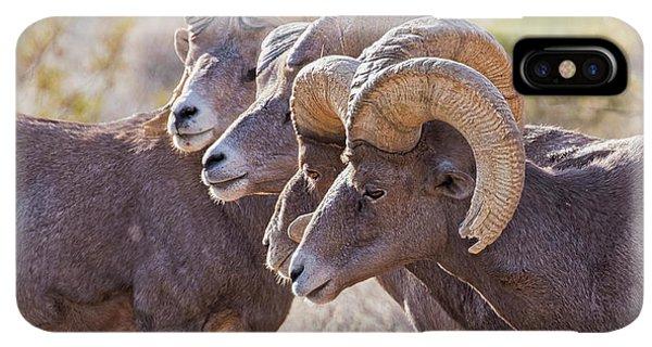 Rocky Mountain Bighorn Sheep iPhone XS Max Case - Meeting Of The Horns by Jurgen Lorenzen
