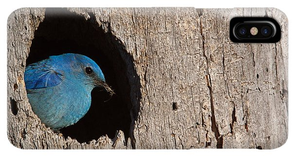 Rocky Mountain iPhone XS Max Case - Mountain Bluebird, Sialia Currucoides by Tom Reichner