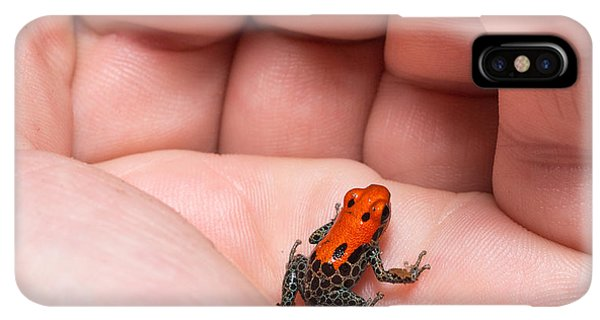 South America iPhone XS Max Case - Red-backed Poison Frog, Ranitomeya by Christian Vinces
