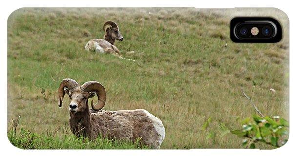 Rocky Mountain Bighorn Sheep iPhone XS Max Case - Resting Bighorn Sheep by Robert Bales