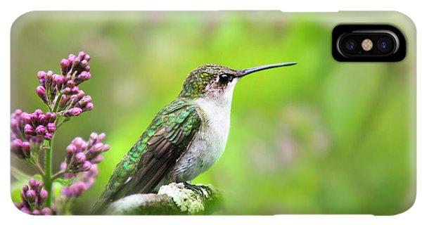 Humming Bird iPhone XS Max Case - Spring Beauty Ruby Throat Hummingbird by Christina Rollo