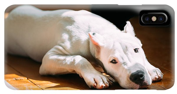 Puppies iPhone XS Max Case - The Dogo Argentino Also Known As The by Grisha Bruev