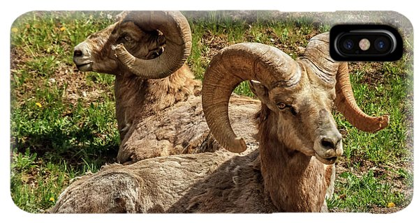 Rocky Mountain Bighorn Sheep iPhone XS Max Case - Two Resting Bighorn Sheep by Robert Bales