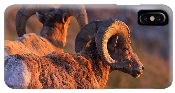 Rocky Mountain Bighorn Sheep iPhone XS Max Case - Warm Touch by Kadek Susanto