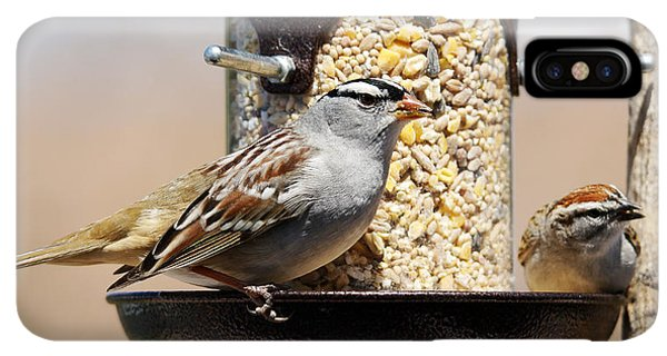 Sunflower Seeds iPhone XS Max Case - White-crowned Sparrow, Zonotrichia by Sylvie Bouchard