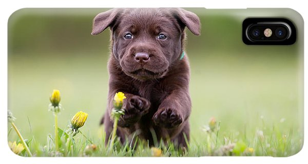 Puppies iPhone XS Max Case - Young Puppy Of Brown Labrador Retriever by Bigandt.com