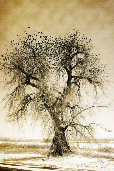 Bird Tree Fine Art  Mono Tone And Textured Poster