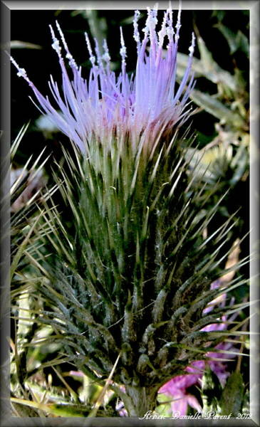 Glowing Purple Thisle Flower Poster