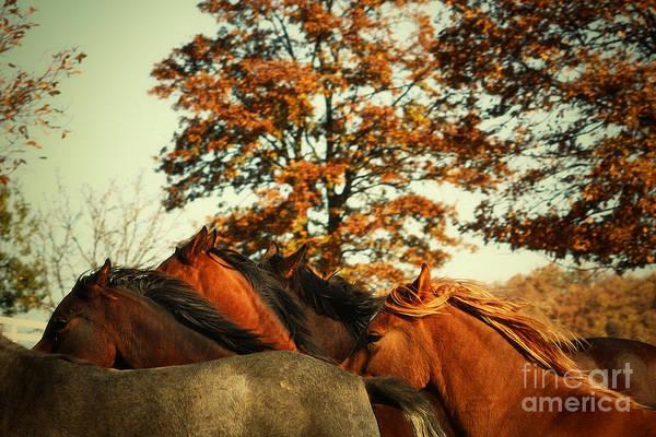 Autumn Wild Horses Poster