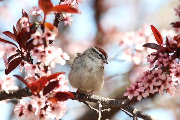 Beautiful Sparrow Poster