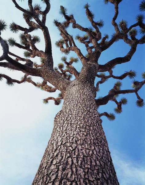 California, Joshua Tree National Park Poster