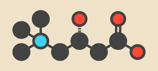 Carnitine Food Supplement Molecule Poster
