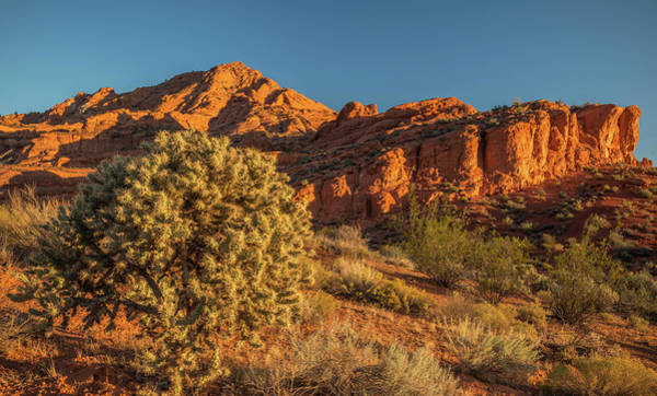 Cholla Cactus And Red Rocks At Sunrise Poster
