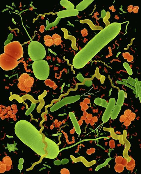 Common Types Of Bacteria Poster