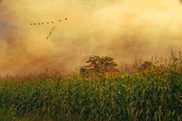 Cornfield And Fog Poster