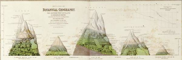 Global Botanical Geography Poster