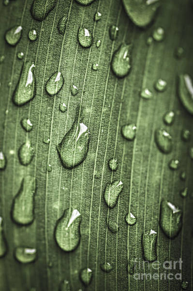 Green Leaf Abstract With Raindrops Poster