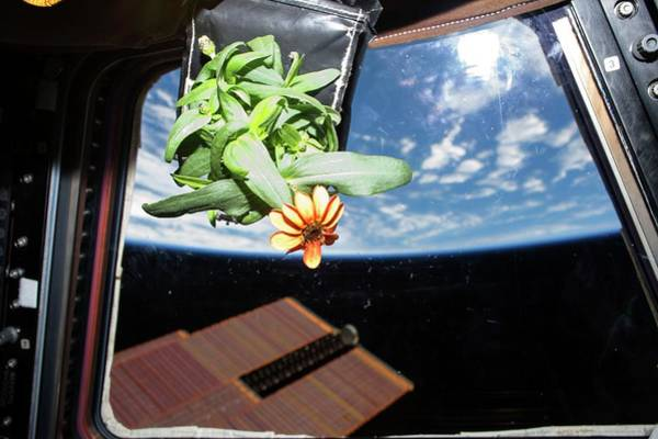 Horticulture Experiment On The Iss Poster