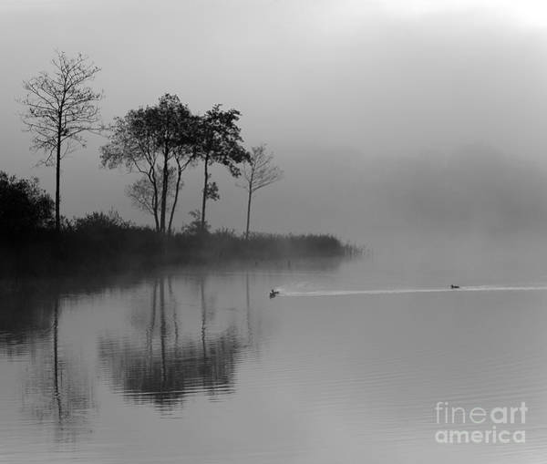 Loch Ard Trees In The Morning Mist Poster