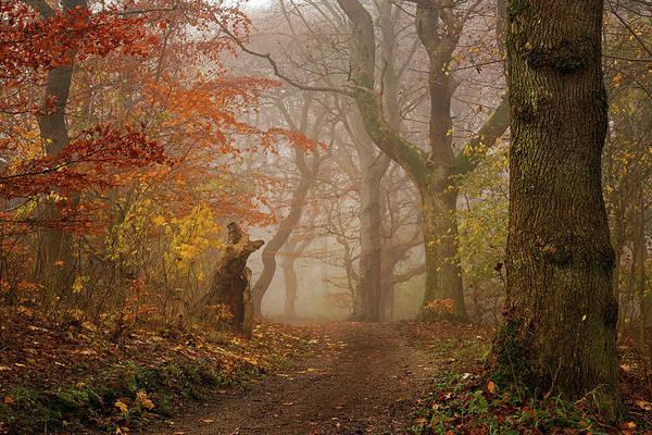 My Autumn Walk Poster