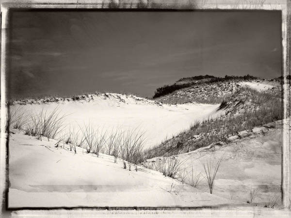 Sandy Neck Dunes Poster