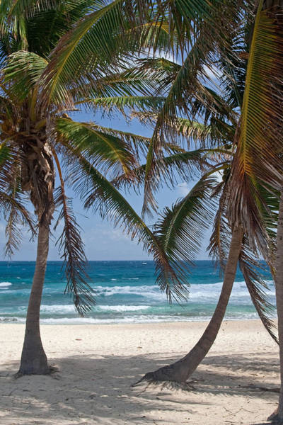 Serene Caribbean Beach  Poster