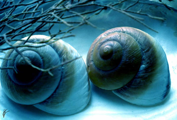 Poster featuring the photograph Snail Joy  by Colette V Hera  Guggenheim
