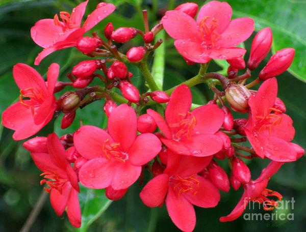 Lovely Spring Flowers Poster