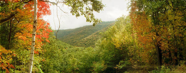 Trees On Mountain During Autumn Poster