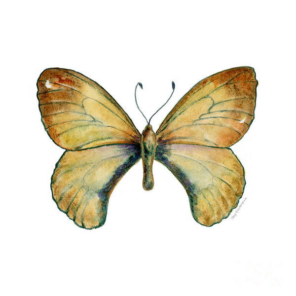 15 Clouded Apollo Butterfly Poster