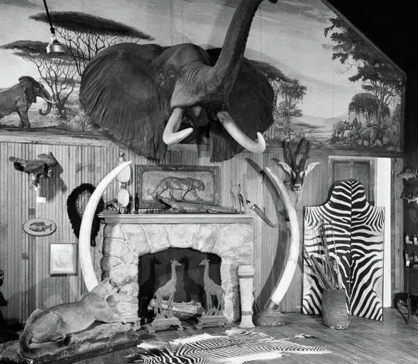 1940s 1950s Room With Big Game Trophies Poster
