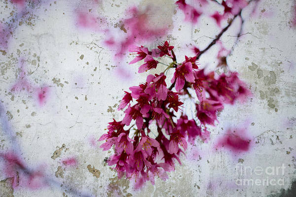 Deep Pink Flowers With Grey Concrete Texture Background Poster