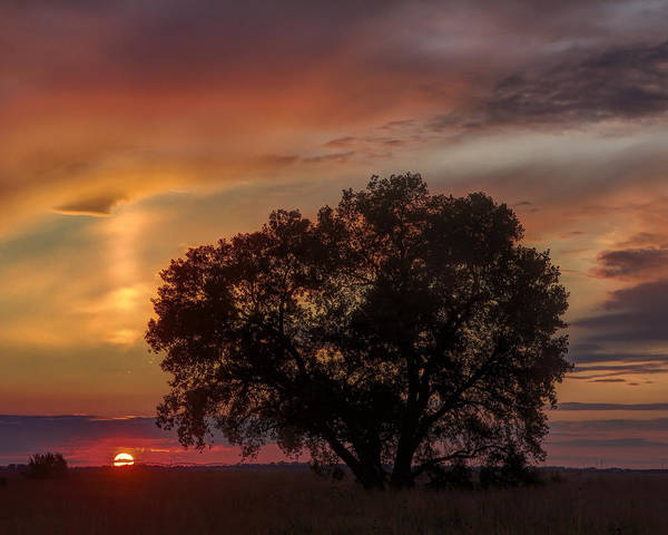 Light Pillar And Cottonwood Poster