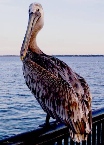 Pelican At Port Poster