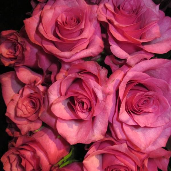 Rosebouquet In Pink Poster