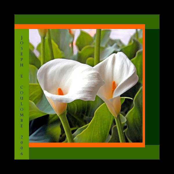 2 White Lily Flowers Poster