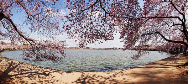 Cherry Blossom Trees In The Tidal Basin Poster
